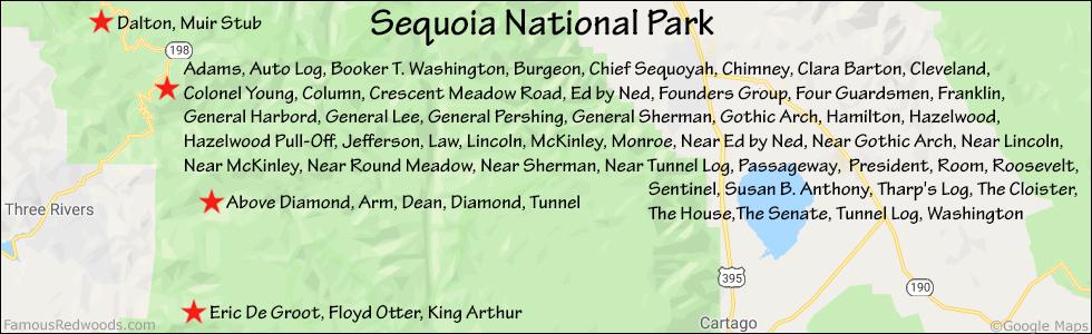President Tree Famous Redwoods